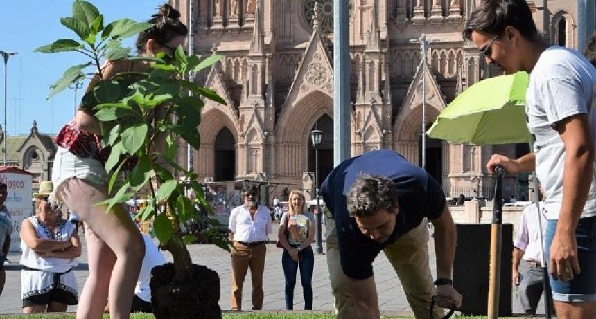 Plantaron un ombú en la Plaza Belgrano