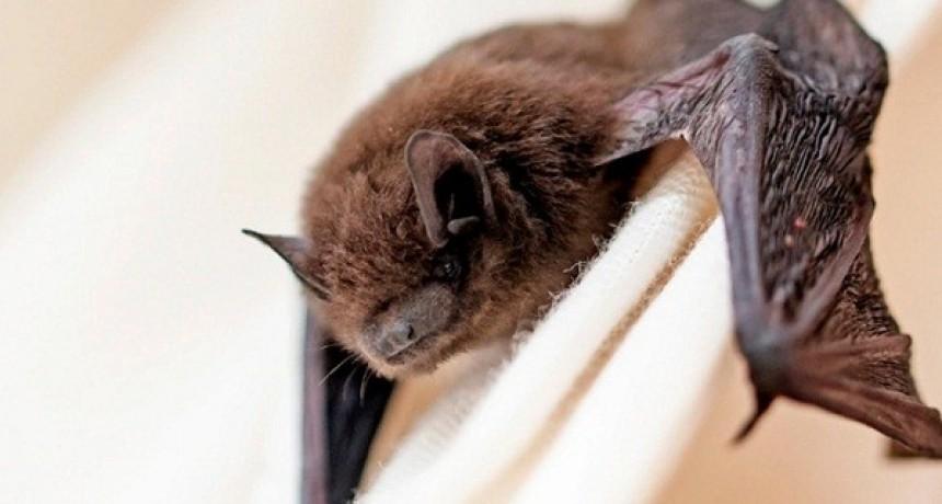 Advertencia por la aparición de un murciélago con rabia