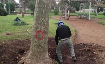 Luego de la polémica, comunicado del Municipio por la poda en la Plaza Colón