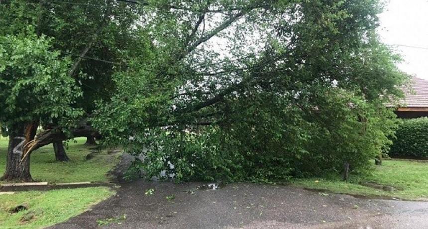 La tormenta dejó secuelas en distintos puntos de Luján